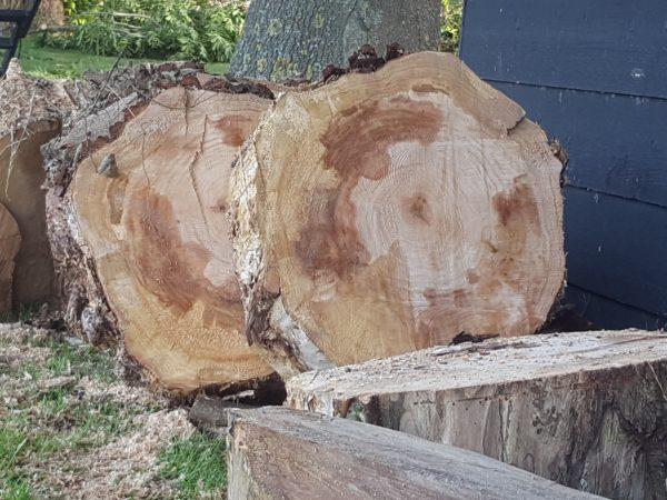 houtblokken wilg