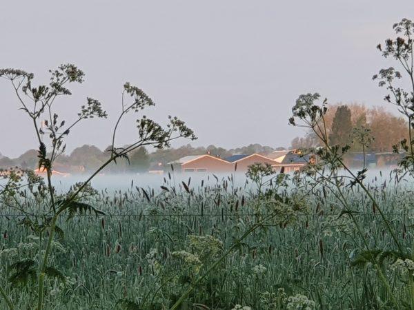 stilte op het platteland